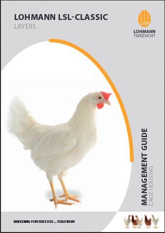 مرغ نژاد خارجی رنگی با تولید بالا ، سالیانه 300 تخم