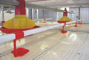 سیستم بستر یا سیستم قفس در پرورش مرغ بومی . توصیه مهم