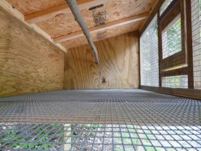 سیستم قفس مرغ تخمگذار بومی در پرورش مرغ محلی