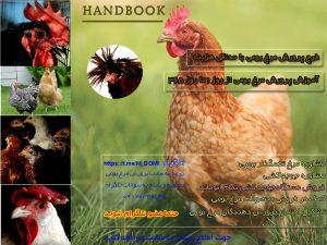 طرح پرورش مرغ بومی