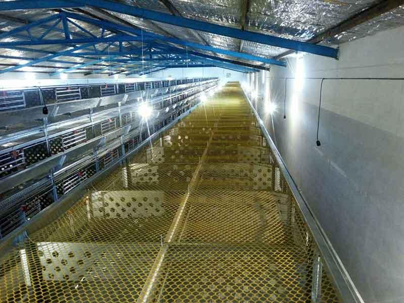 طرح قفس مرغ تخمگذار طراحی قفس مرغ تخمگذار عکس قفس مرغ تخمگذار قیمت فروش قفس مرغ تخمگذار قیمت قفس های مرغ تخمگذار قفس مرغ تخمگذار کارکرده کود کش قفس مرغ تخمگذار مشخصات قفس مرغ تخمگذار