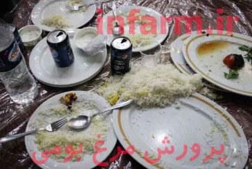 استفاده از ضایعات رستورانها در تغذیه مرغ بومی