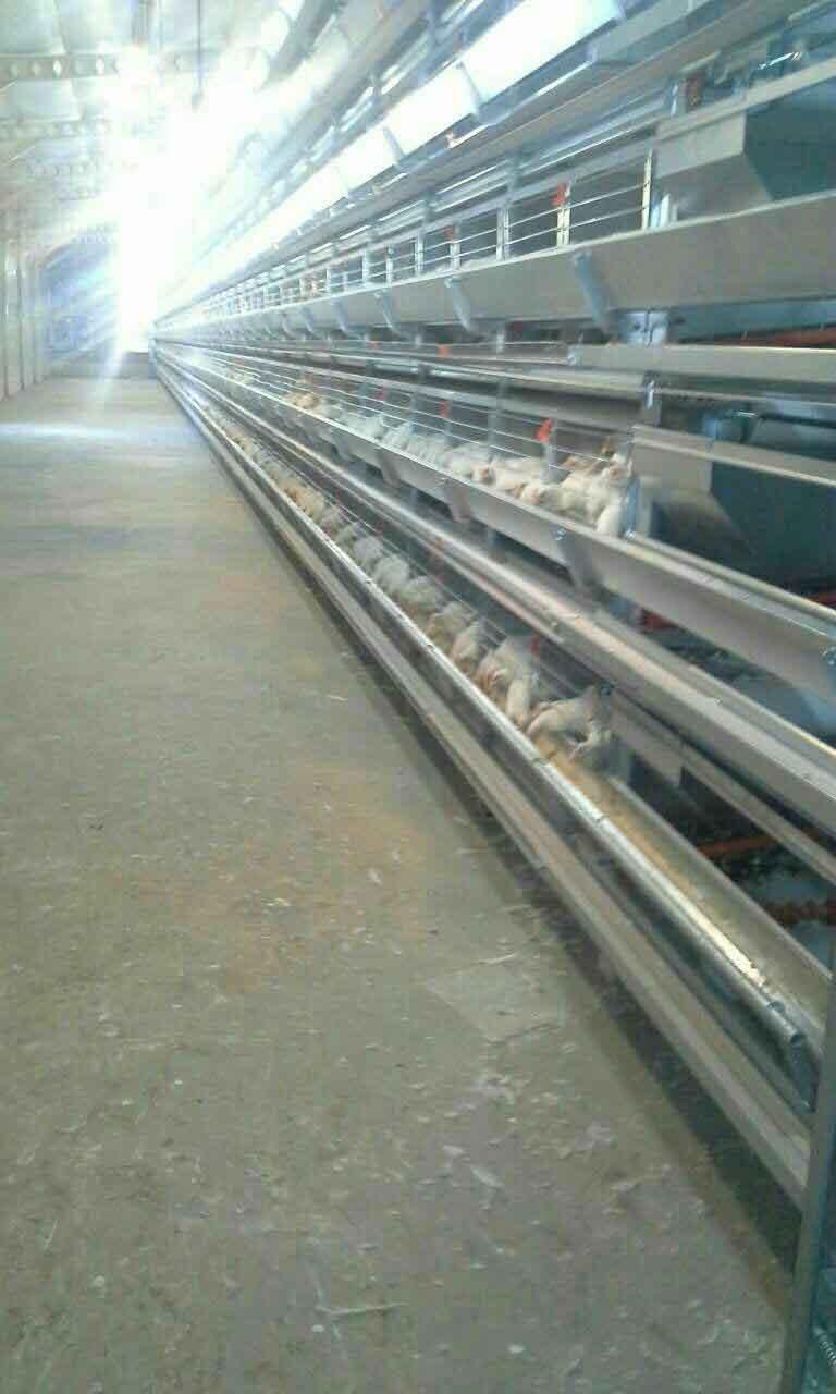 خرید قفس مرغ تخمگذار تمام اتومات