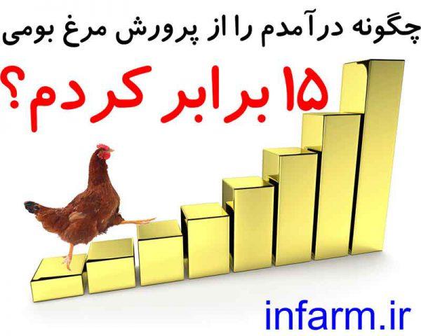 راز 15 برابر کردن سود پرورش مرغ بومی