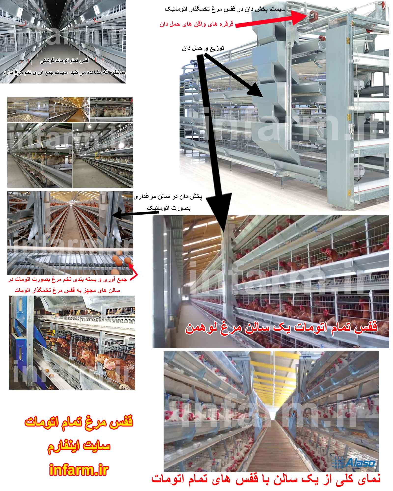 قفس مرغ تخمگذار تمام اتومات ایرادات+ برتریها برای انتخاب بهتر خرید قفس مرغ تخمگذار