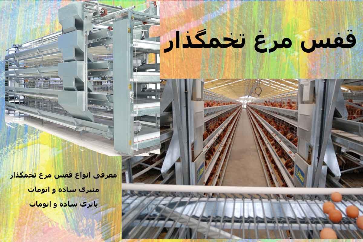 فروش قفس مرغ تخمگذار - توصیه های مهم و کاربردی برای خرید قفس مرغ تخمگذار